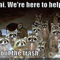 funny-pictures-raccoons-are-here-to-help-you.jpg